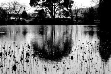 Kyoto's Osawa-no-ike Pond in B&W