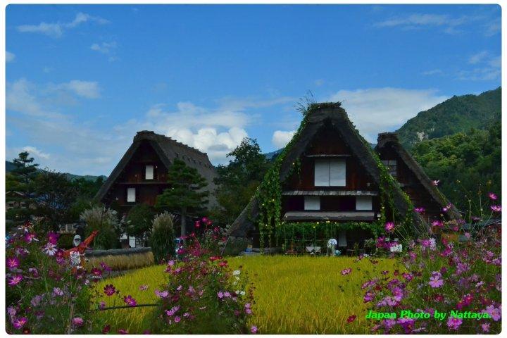 ชิราคาวาโกะ กับธรรมชาติอันงดงาม