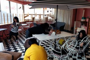 A wide shot of the cafe. Hard floors mean you can only sit in chairs, some of which are used by cats.