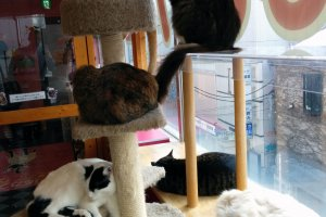 Cat tower, also known as the fluffy fortress.