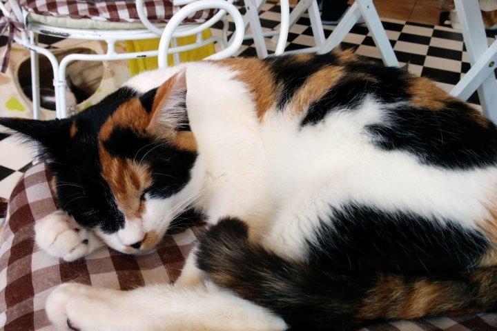 คาเฟ่แมวเทนชิ โนะ โคเนโกะ เนโกะ