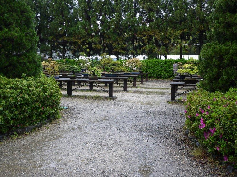 Entering the bonsai garden