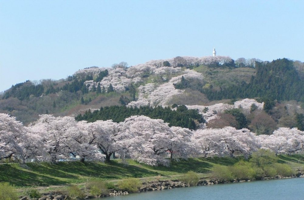 Cherry blossom-laden hills with the statue of Goddess of Mercy at the top overlooking the river