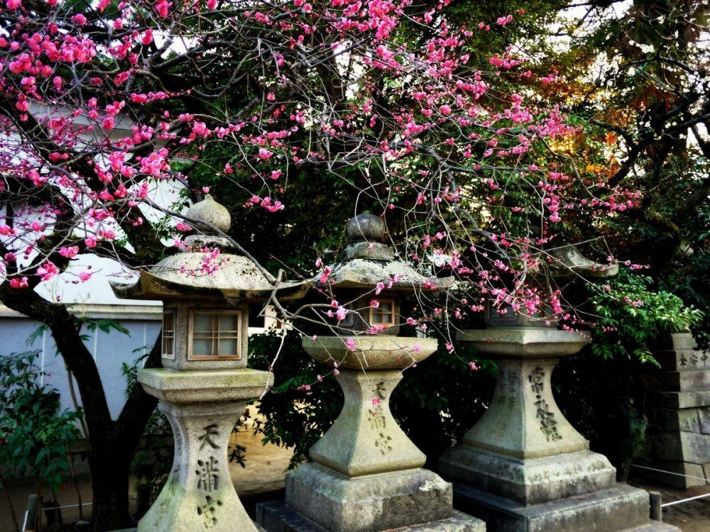 석등과 매화꽃