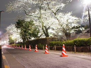 On the way back I took a silent byway to avoid the crowds; peaceful and pleasant—that's what the cherry blossom experience to me is all about.
