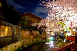 Illumination of cherry blossoms