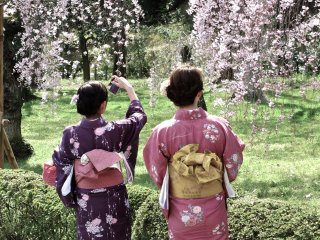 มีสาวๆ ในชุดกิโมโนออกมาชื่นชมดอกซากุระ
