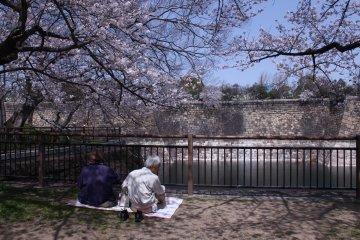 ชมซากุระที่สวนปราสาทโอซาก้า
