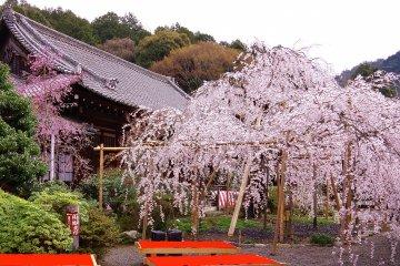 Le Temple Bishamon-dô de Kyoto