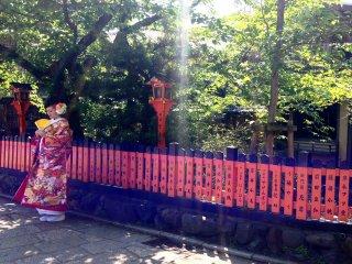 Ánh nắng trộm nhìn qua hàng cây trên lối đi bộ ở Gion, Kyoto