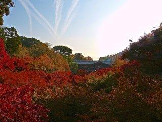 Ponte com cobertura de telhas cinzentas e corredores aninhados na floresta de outono