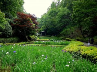 En regardant vers les jardins d'iris et la pergola