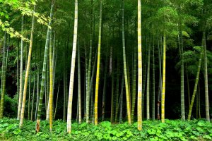 Bamboo grove holding darkness