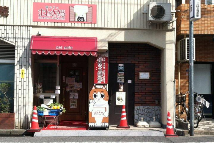 Maneki Neko Cat Cafe in Hiroshima