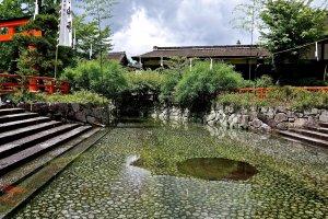 夏のみたらしの池