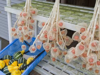 The orange papery covering of the hōzukifruit dries out to become diaphanous