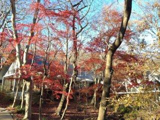 Seiji FujishiroGallery & Museum: The celebrated Kiri-e (Japanese art of paper cutting) artist has a stunning gallery in Nasu Highlands