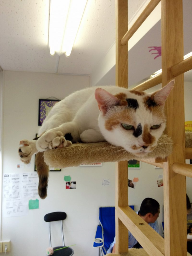 Cheapest Cat Cafe Tokyo