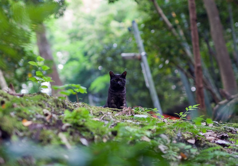 Surprised, this black cat spotted me from the path above