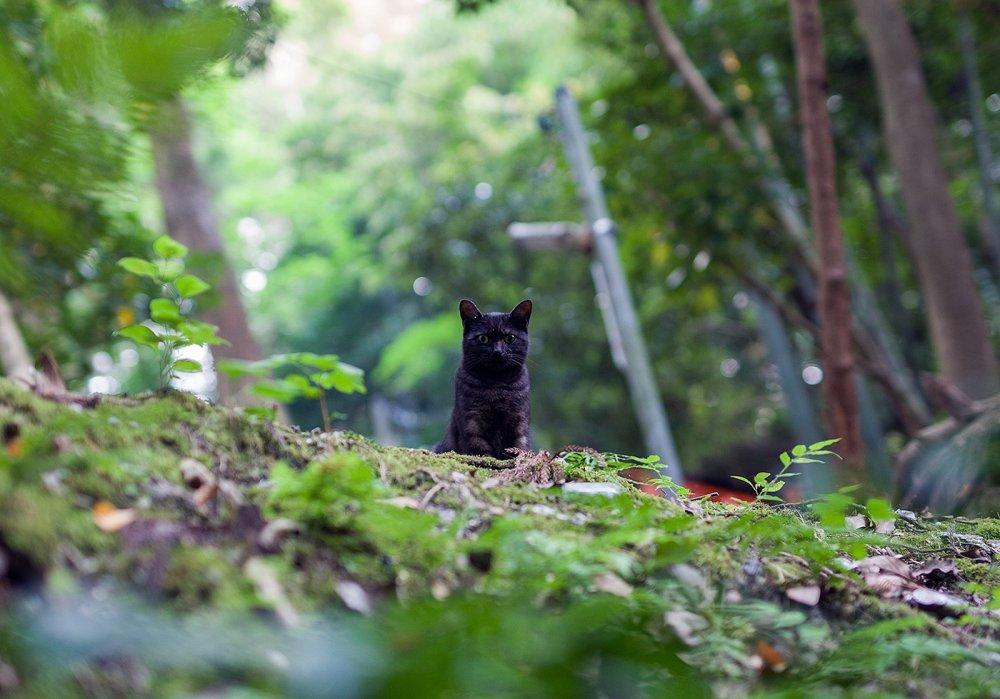 เจ้าแมวดำตัวนี้มองเห็นผมจากข้างบน