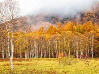 พื้นที่เปิดกว้างซึ่งมีประตะสีขาวเปิดไปสู่ป่าไม้