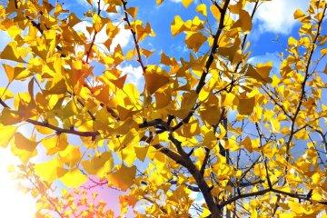 秋色に染まる「ふくい健康の森」