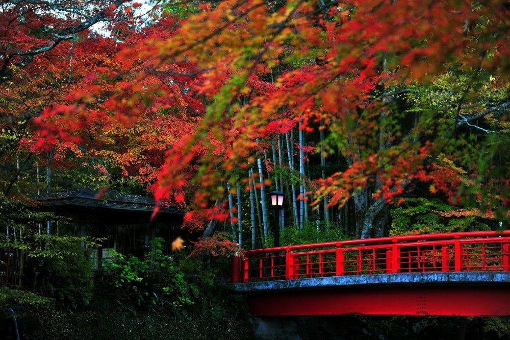 Katsura Bridge over Shuzenji River. The Autumn leaves are as colorful as the vermilion bridge.