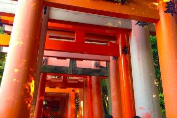 Os Torii de Fushimi Inari Taisha