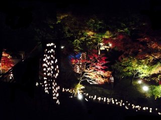 The lanterns bring out the autumn colors of the trees at night.