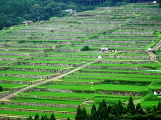 A view of the Sakamoto rice terraces from the viewing platform
