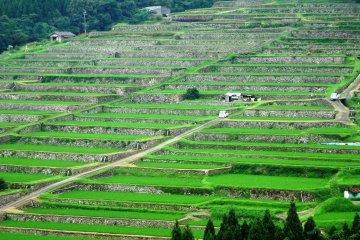 Sakamoto Rice Terraces