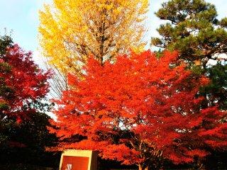 鳳凰堂正面玄関付近の紅葉も色を添えているようだ