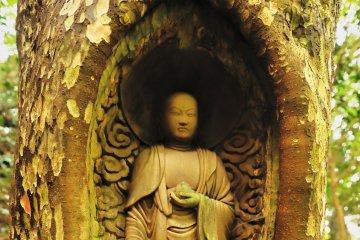 Le Jizō en Bois Vivant de Ehime