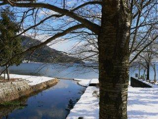 호숫가의 벌거벗은 나무