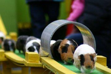 Chikozan Park Children's Zoo