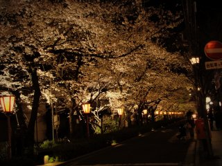 As the evening approaches, why not get a drink at one of the bars at Kiyamachi street? There you will find yourself in a gorgeous tunnel of pinks and whites lit up nicely after the sunset.