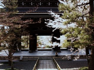 Then I found myself an impressive looking temple, which of course as any other self-respecting temple had tons of cherry trees planted everywhere.