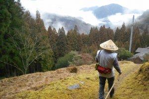 Randonnée dans les chemins de pèlerinage de Totsukawa