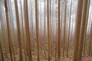 Les forêts mystiques de Totsukawa