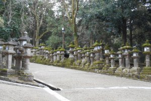 Path lined with stone lanterns