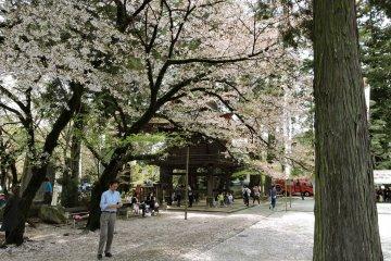 Festival Musim Semi di Erinji