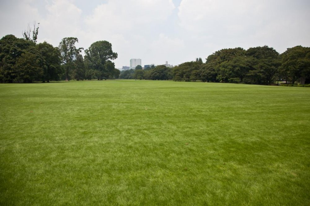 Large parts of the park are wide open soft green grass, ideal for relaxing and enjoying the sunshine