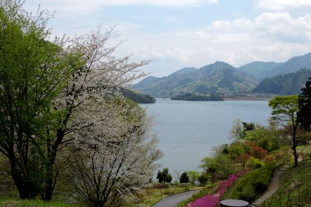 Spring Views Over Lake Miyagase