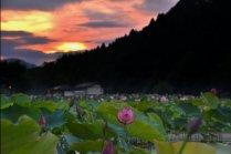 Волшебная ночь в раю лотосов