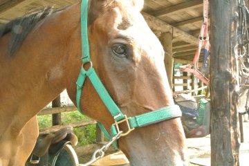 石狩川河口で乗馬を楽しむ