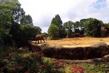 Zoológico Sendai Yagiyama