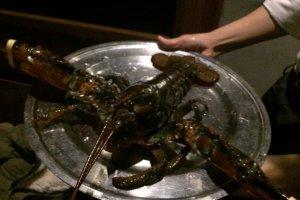 L size的龙虾