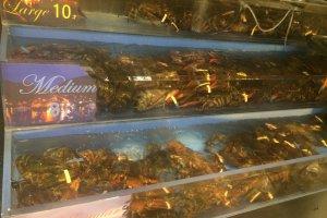 门口陈列的龙虾