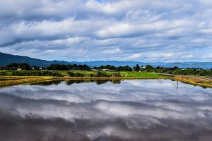 Clouds reflecting in a rice field