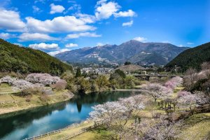 Cherry blossoms in Mizukami